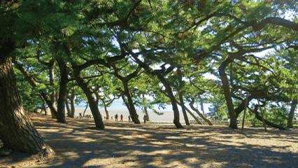 世界文化遺産富士山の構成資産「三保の松原」